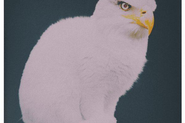 Catgle