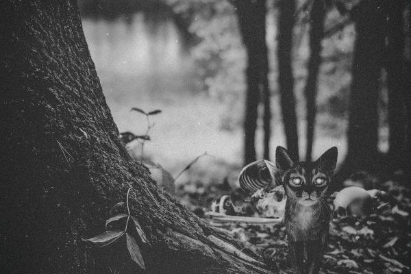 Dering Woods